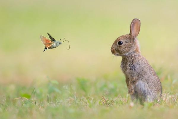 蝶とウサギ