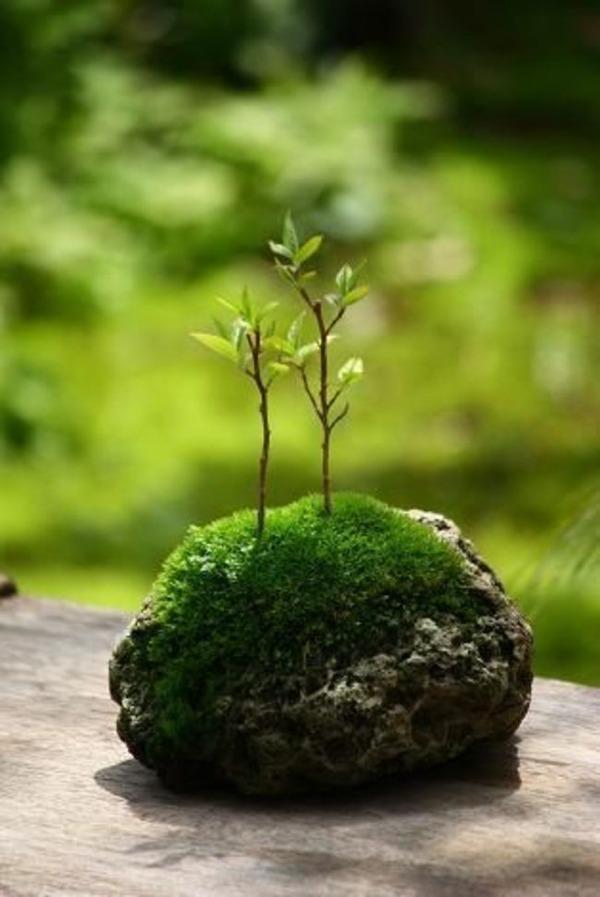 1つの岩で庭