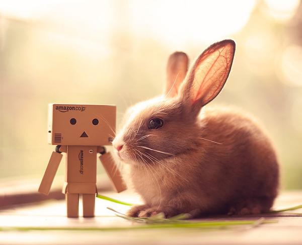 ウサギのお友達