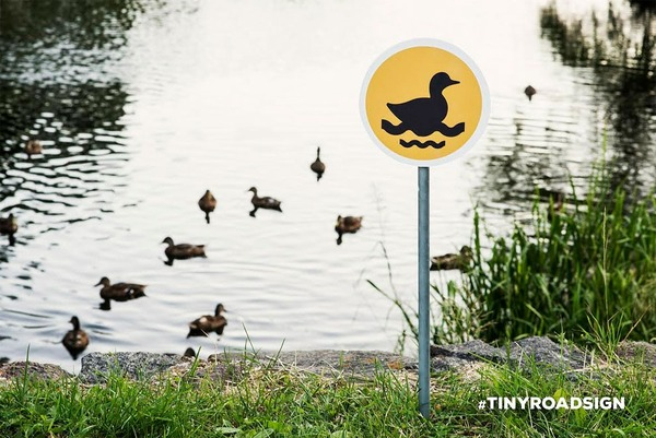「泳ぐアヒル」 / アヒルが集まる池