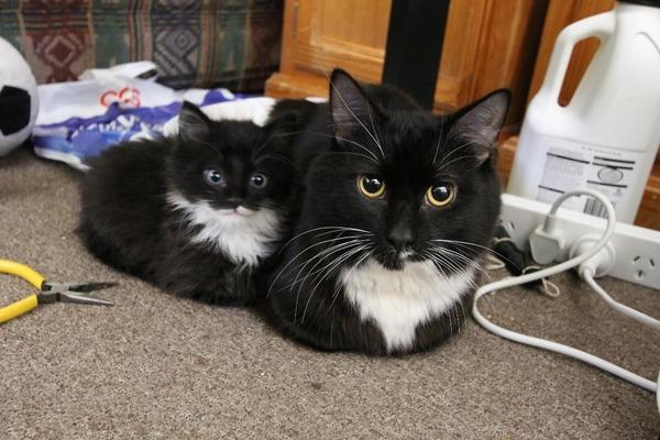 大人猫と子供猫の仲良し画像 (10)