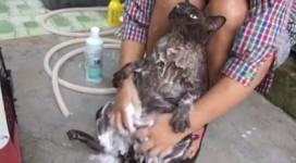猫のシャンプーマッサージ!諦めの境地で悟りを開いた猫動画