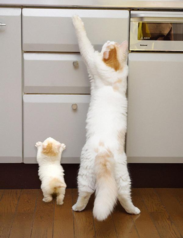 大人猫と子供猫の仲良し画像 (11)