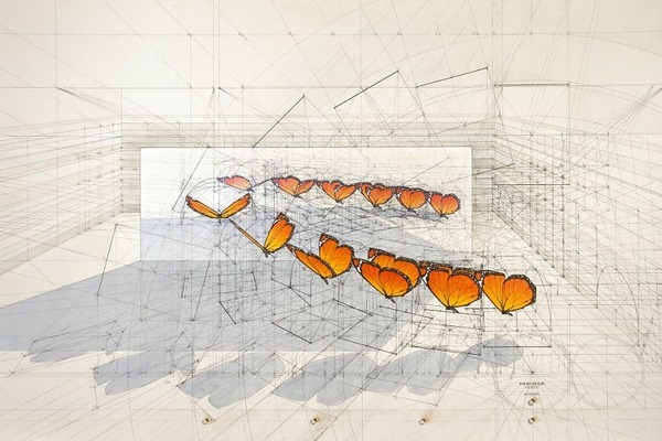 黄金比で描かれた手描きイラスト集!蝶や貝殻など (9)
