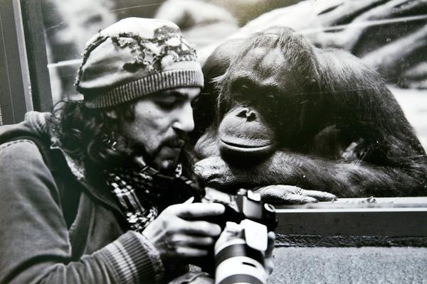 カメラに興味津々な動物の画像 (13)