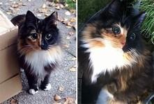 盲目の迷いネコ。珍しい毛色のキメラ猫が愛を知る