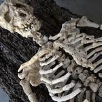 本物の骸骨みたい。珊瑚の欠片で作る人体の骨格標本