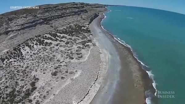 パタゴニア海岸の鵜