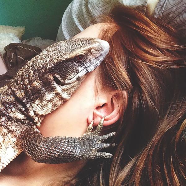 人間にとても懐く可愛いトカゲのペット! (17)