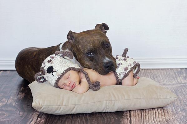 ペットは大切な家族!犬や猫と人間の子供の画像 (78)