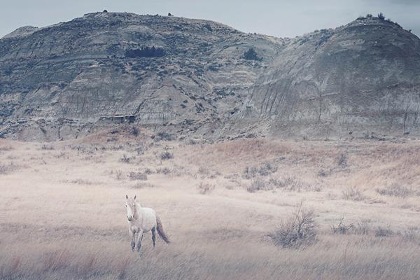 野生の馬の写真 (9)