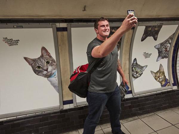 猫だらけ!猫の写真で満たされたロンドンの地下鉄 (6)