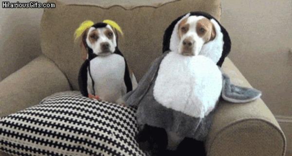 コスプレ犬猫たちの動くおもしろGIF画像 (1)