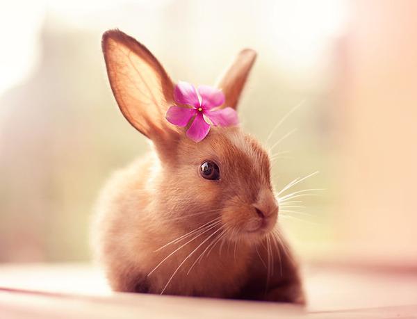 お花うさぎ