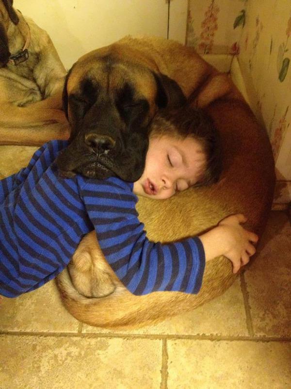 ペットは大切な家族!犬や猫と人間の子供の画像 (59)