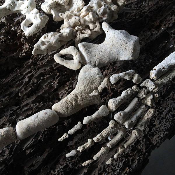 本物みたい。珊瑚の欠片で作る人体の骨格標本 (5)