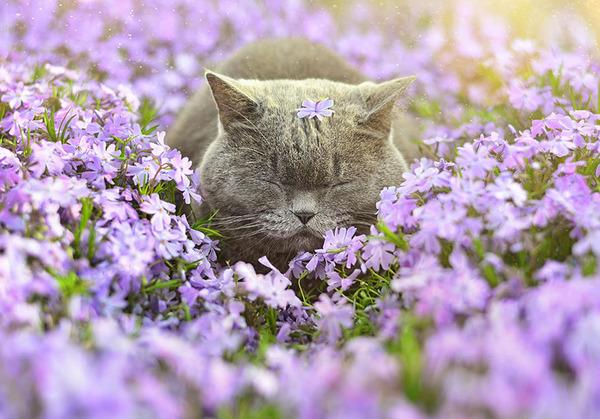 くんくん良い香り。花の匂いを嗅ぐ動物たちの画像 (13)