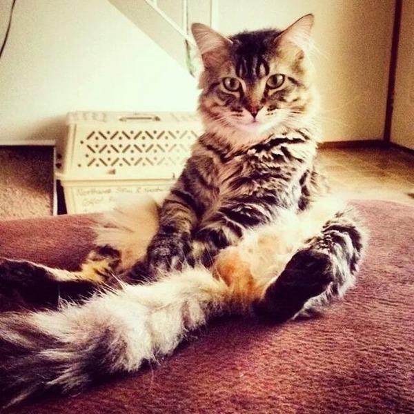 ちょこんっとお座りする猫