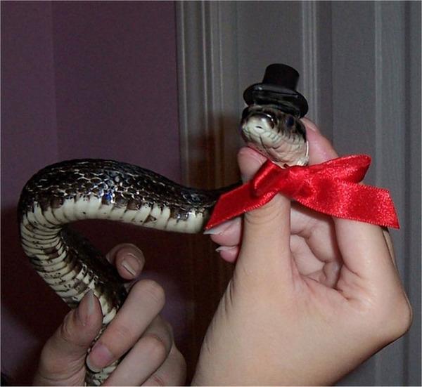 なんだこれカワイイぞ!帽子を被ったヘビ画像特集 (17)
