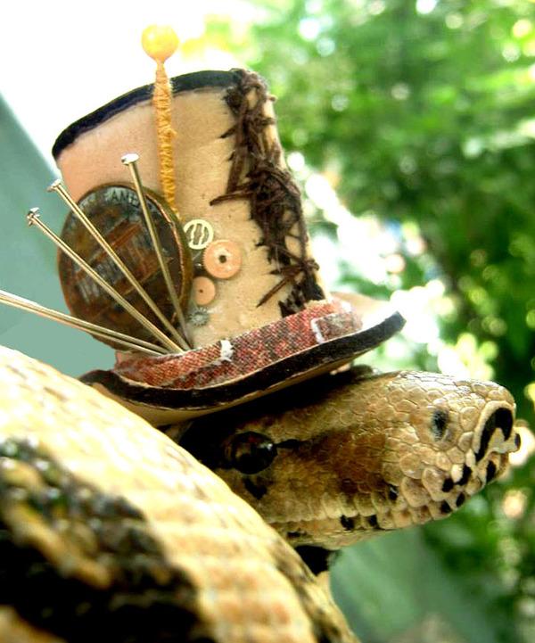 なんだこれカワイイぞ!帽子を被ったヘビ画像特集 (16)