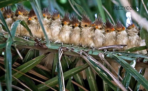 小鳥が温まる為に皆で寄り添っている可愛い画像 (10)