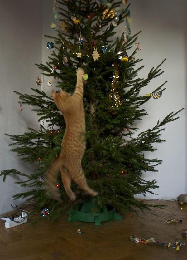 猫、あらぶる!クリスマスツリーに登る猫画像 (50)