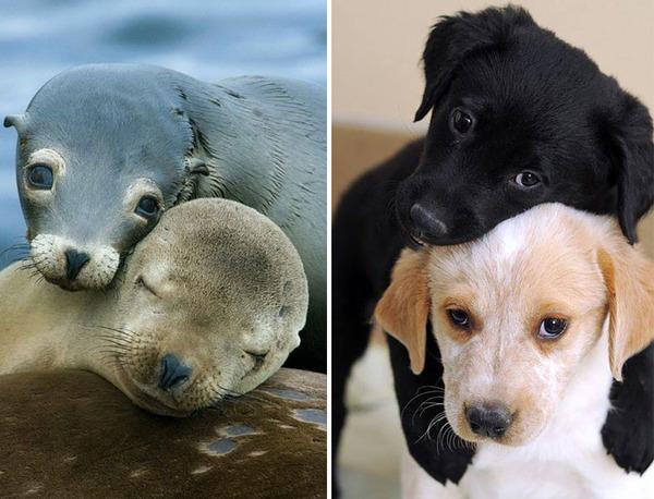 アザラシって犬そっくりじゃね?犬とアザラシを比較画像! (6)