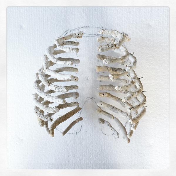 本物みたい。珊瑚の欠片で作る人体の骨格標本 (4)