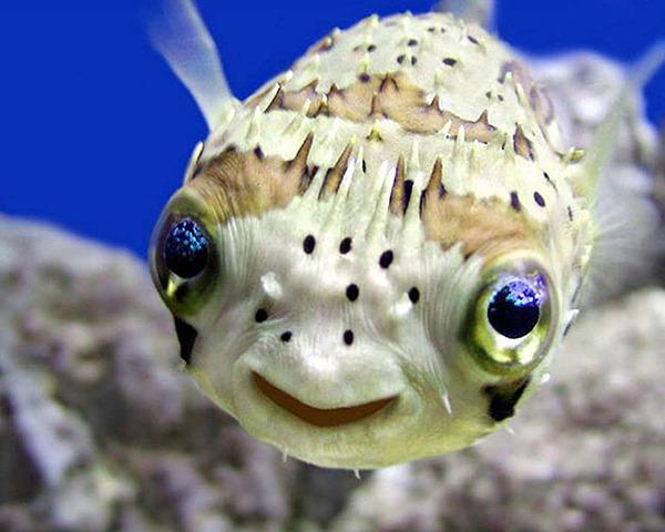 ニッコリ。幸せそうな笑顔が素敵な動物画像特集! (21)