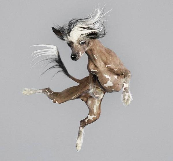 飛ぶ犬!空飛ぶわんこの絶妙な表情が逸品な写真 (10)
