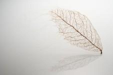 超繊細!人間の髪の毛で作るリアルな木の葉
