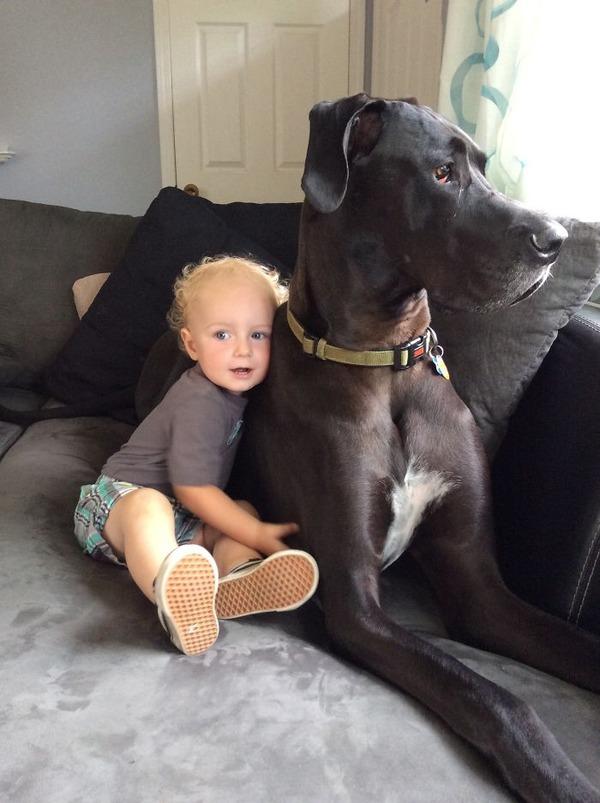 ペットは大切な家族!犬や猫と人間の子供の画像 (39)