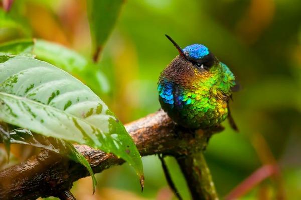 ハチドリ、可愛い、美しい小鳥の写真 (14)