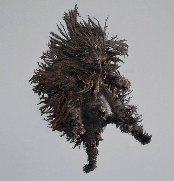 飛ぶ犬!空飛ぶわんこの絶妙な表情が逸品な写真 (2)