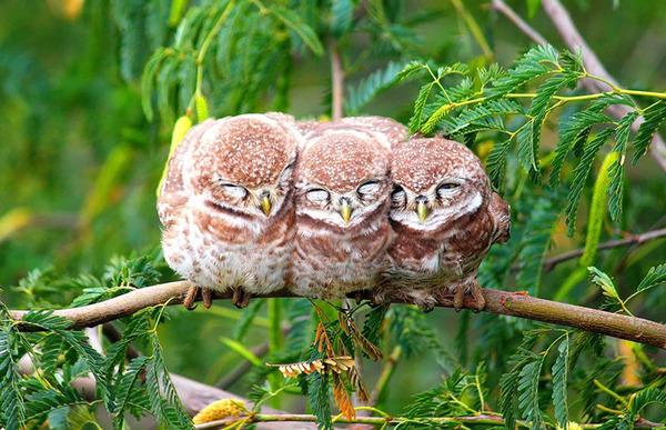 小鳥が温まる為に皆で寄り添っている可愛い画像 (7)