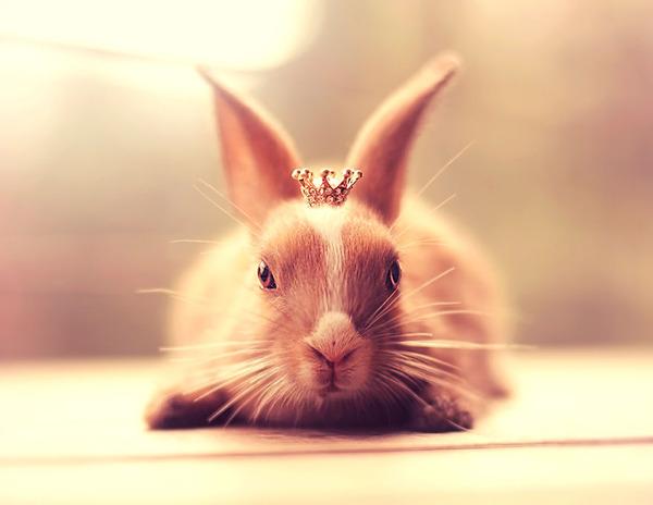 王女様ウサギ