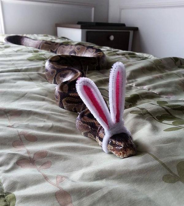 なんだこれカワイイぞ!帽子を被ったヘビ画像特集 (29)