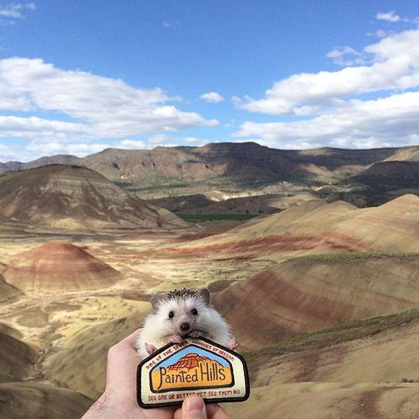 ハリネズミと荒山