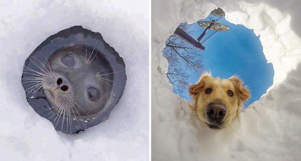 アザラシって犬そっくりじゃね?犬とアザラシを比較画像! (20)