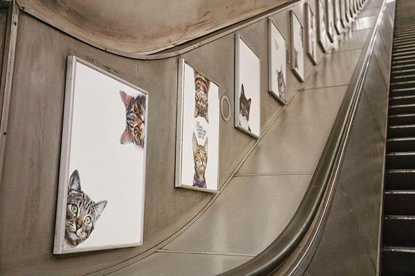 猫だらけ!猫の写真で満たされたロンドンの地下鉄 (4)