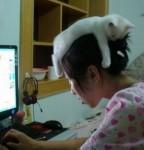 猫帽子!人の頭に乗るのが大好きな猫の画像特集!