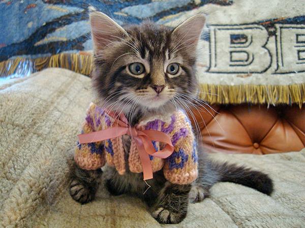 寒いからニットのセーターを小動物に着せてみた画像 (3)