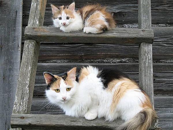 大人猫と子供猫の仲良し画像 (12)