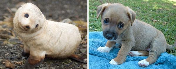 アザラシって犬そっくりじゃね?犬とアザラシを比較画像! (24)
