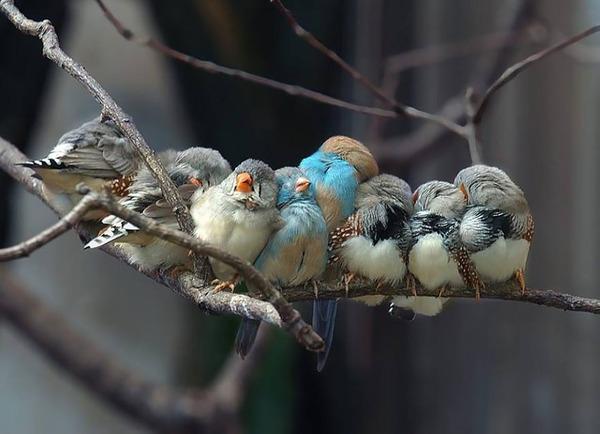 小鳥が温まる為に皆で寄り添っている可愛い画像 (21)