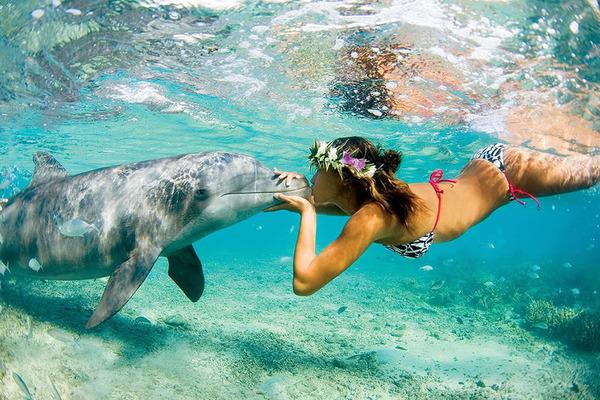イルカとの戯れ