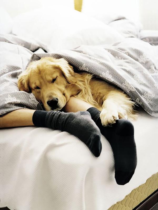 ベッドで寝る犬 かわいいおもしろ画像 22