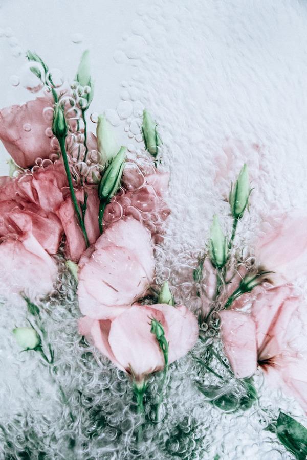 溺れる花の美しさ。花と水と泡の写真シリーズ『flotsam』 (3)