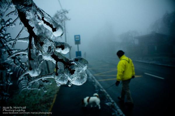 小枝の先まで凍てつく