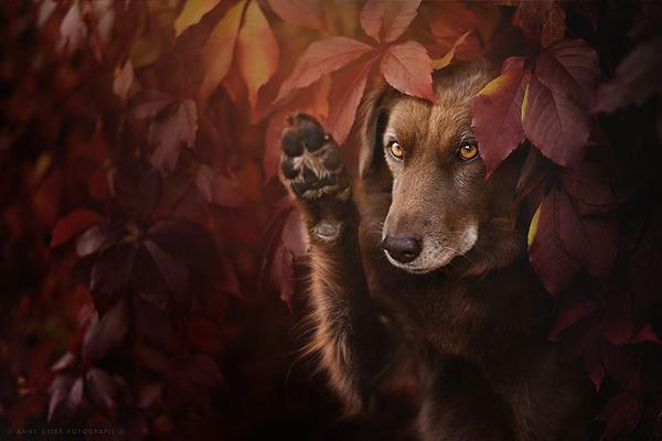 秋が来た!紅葉と遊ぶ犬画像 (14)